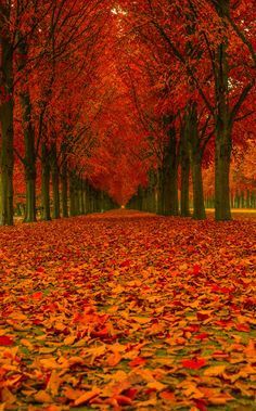 Just my dream of colorful forest""