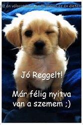 Képtalálat a következőre: jó reggelt képek Retro Hits, Bichon Frise, Jaba, Good Morning, Labrador Retriever, Cute Animals, Jokes, Puppies, Funny