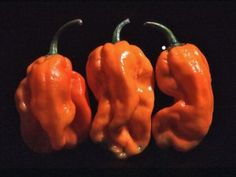 Numex Suave Orange is a milder habanero with fruity flavor and great color