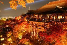 2016年 秋の京都を楽しむ紅葉ライトアップ10選 | TripAdvisor Gallery