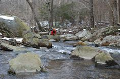 Brook Trout fishing in the Shenandoah National Park in Virginia.