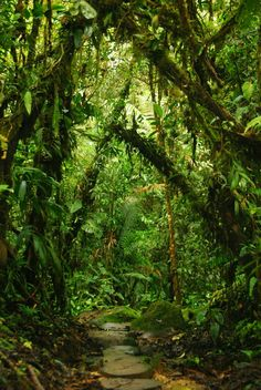 For the plants Jungle Images, Beautiful World, Beautiful Places, Jungle Gardens, Mystical Forest, Amazing Nature, Nature Photos, Mother Nature, Enchanted