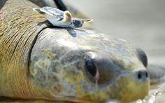 20 lições de vida que podemos aprender com as tartarugas