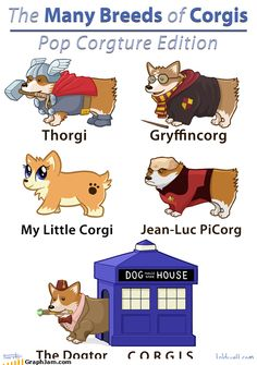 Looooove a corgi. Looooooooooove a nerdy corgi! The Bloodhound Gang, Funny Animals, Cute Animals, Funny Dogs, Animal Memes, Tv Funny, Funny Art, Pokemon, Pikachu