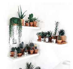 cactus shelves