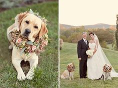The Best Dogs in Weddings Ever | DogVacay Official Blog