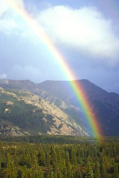✯ Rainbow Over Forest