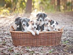 Puppies 101: Everything You Need to Know About Your New Dog