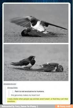 When I saw the pictures I thought that the bird was angry and yelling at the other bird like it had just killed it as his prey