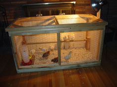 My New Chick Brooder Coop (**Pics**) Chick Brooder Coop Chicken Brooder Box, Chicken Coup, Chicken Pen, Chicken Coop Plans, Chicken Garden, Backyard Chicken Coops, Backyard Farming, Chickens Backyard, Keeping Chickens