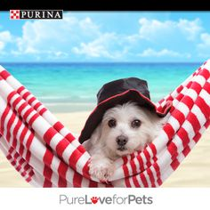Now that's what we call paradise! Winning a year's worth of FREE Purina® wouldn't be bad either…pin your favorite pic of cats or dogs on spring break and you just might WIN! Enter today! NO PURCHASE NECESSARY. Valid in 50 U.S. & D.C. Must be 18+ (19+ in AL & NE; 21+ in MS), & own a cat or dog or both. Ends 3:00 p.m. ET on 4/29/14. Void where prohibited. See Official Rules at http://sweeps.piqora.com/PurinaSpringBreak. #PurinaSweeps
