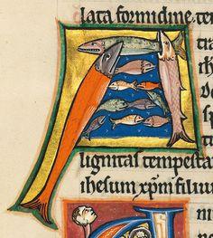 Fishy initial. Psalter, Oxford ca. 1210 (München, Bayerische Staatsbibliothek, Clm 835, fol. 163r)
