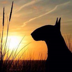 ✔️✅ Sunset Bully