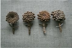 pine cone bouties