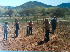 Throw Back Thursday - planting the lower vineyard with Marachel Foch circa 1981