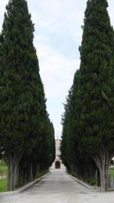 Treelined Road to Church, Rome, Italy