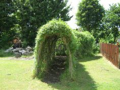 would be fun for children, grow willow into a tunnel