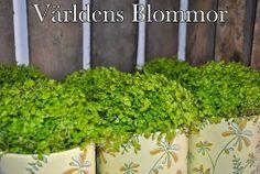 Växter, snittblommor, presenter och mycket annat som gör hemmet mysigare Mittemot Polishuset i LaCity Världens Blommor Norra Långgatan 16 Landskrona 0418 65 11 59