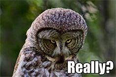 funny owl...