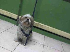 www.PetHarbor.com pet:LACO1.A5013298
