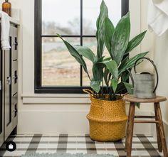 Staś z Japonii || Aspidistra elatior House Plants Decor, Plant Decor, Popular House Plants, Neon Pothos, Cast Iron Plant, Pothos Plant, Best Indoor Plants, Low Maintenance Plants, Bathroom Plants