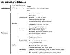 PROGRAMA ESTUDIO EFICAZ, REFLEXIONES, ESTRATEGIAS Y COLECCIÓN DE ESQUEMAS DE CIENCIAS, MATEMÁTIAS Y LENGUA