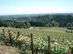 Archery Summit vineyards in Dundee Hills of Oregon
