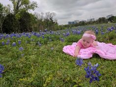 Where to find Bluebonnets, around Houston, in 2017!