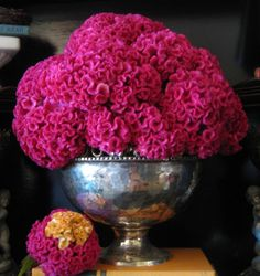 Coxcomb for the table