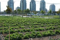 Vancouver Food Strategy proposes a big, bold, local food system!