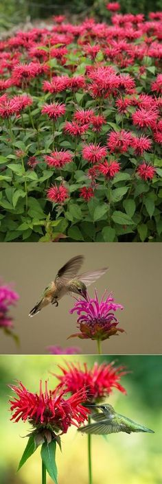 15 Gorgeous Flowers that Will Bring Hummingbirds to Your Garden - PLANTS - Blumen Hummingbird Flowers, Hummingbird Garden, Beautiful Flowers Garden, Love Garden, Garden Ideas, Amazing Gardens, Beautiful Gardens, Flower Garden Design, Flower Landscape