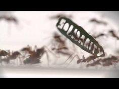 ▶ Ant Rally - YouTube