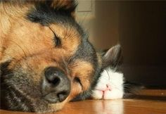 cat and dog - Google Search