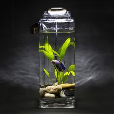 betta fish with fancy self cleaning aquarium and led light. Man I should so get this for my son for his birthday.