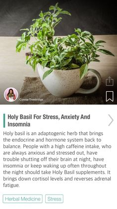 Holy Basil For Stress, Anxiety And Insomnia