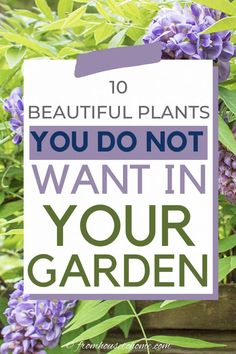 Invasive plant species are difficult to maintain and can destroy the natural environment. Find out which perennials to avoid planting in your garden landscaping even if they do have beautiful flowers. Bamboo Species, Plant Species, Perennial Grasses, Hardy Perennials, Vegetable Garden For Beginners, Gardening For Beginners, Gardening Tips, Container Gardening, Shade Garden