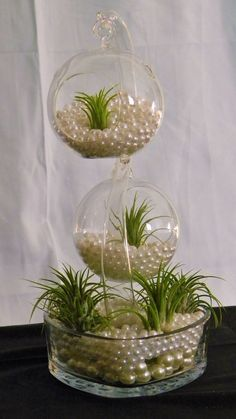 Decorate With Air Plants Succulents In Glass, Succulents Garden, Hanging Air Plants, Indoor Plants, House Plants Decor, Plant Decor, Cat Plants, Air Plant Display, Air Plant Terrarium