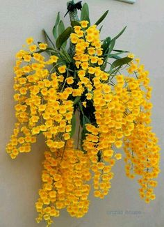 Shade Garden Flowers And Decor Ideas Hanging Orchid Unusual Flowers, Yellow Flowers, Beautiful Flowers, Hanging Orchid, Hanging Plants, Diy Hanging, Orchid Plants, Exotic Plants, Orchid Flowers