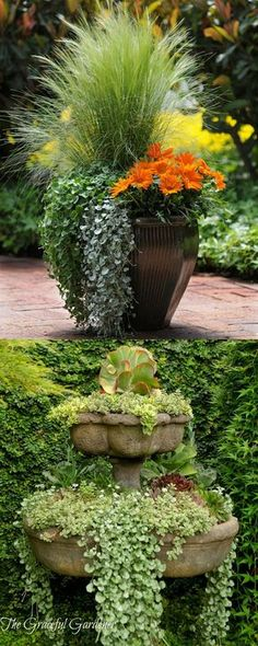 Garden Landscaping - 24 stunning container garden designs with PLANT LIST for each! Lots of designer tips on selecting the best mix of flower plants and creating a beautiful colorful garden which blooms all season with these planting recipes! Container Flowers, Flower Planters, Container Plants, Garden Planters, Container Gardening, Flower Pots, Container Design, Fairy Gardening, Cheap Planters