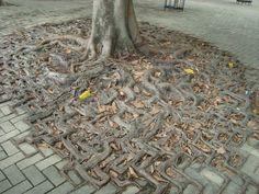 Roots and bricks.