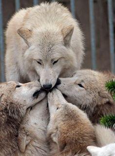 Alpha kisses