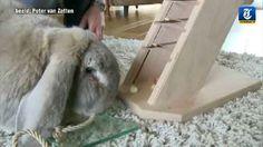 Dienrentrainer Bernice Muntz opent in Lelystad de allereerste konijnenschool van Nederland.