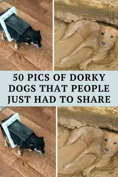 We love our doggos. The world would be one hell of a lonely, sad place without them and no one dares to tell us otherwise. But let's face it, they Witty Jokes, Funny Corny Jokes, Short Jokes Funny, Funny Disney Jokes, Dark Humor Jokes, Funny Jokes For Kids, Cheesy Jokes, Sarcastic Humor, Funny Humor