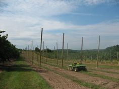 How to Grow Hops in Michigan by the MSU Extension