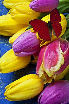 Springtime Tulips And Red Butterfly