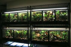Wonderful Images Reptile Terrarium shelf Popular There isn't any doubt this having a furry friend can bring lots of pleasure in order to someone else's life. Terrariums Diy, Frog Terrarium, Terrarium Reptile, Aquarium Terrarium, Glass Terrarium, Aquarium Shop, Reptile House, Reptile Habitat, Reptile Room
