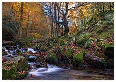 Bosque en Santa Cruz del Valle Urbión - Burgos  por Por Miguel Zaballa