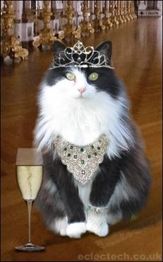 A cat as beautiful as this is a reason to celebrate.