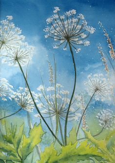 Cow Parsley by louise-art on DeviantArt, inspiration. Cow Painting, Painting & Drawing, Watercolor Flowers, Watercolor Paintings, Wild Flower Meadow, Dandelion Art, Easy Paintings, Painting Techniques, Flower Art