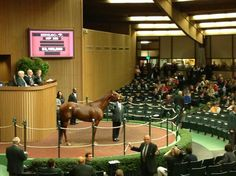 Groupie Doll sells for  $ 3.1 million to Mandy Pope, whose broodmare band includes Havre de Grace and Plum Pretty.